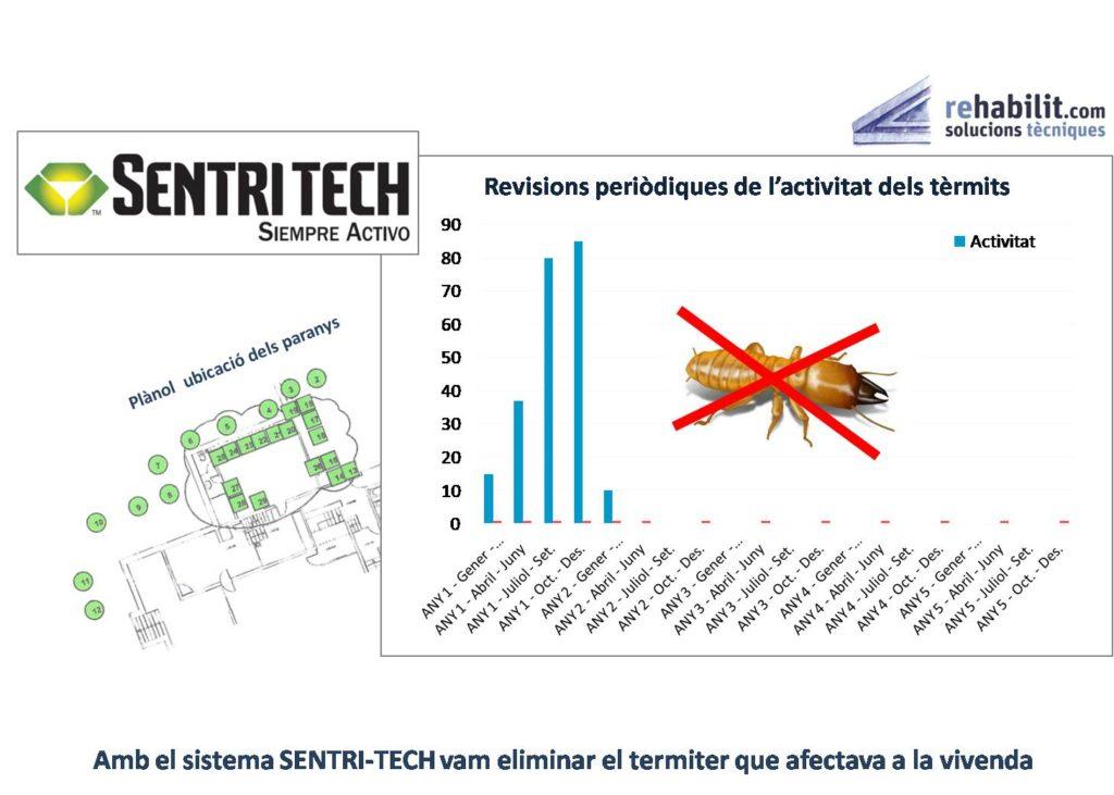 grafic termita